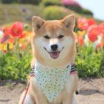 陽気で暖かい房総半島へ!愛犬と一緒に早春の花畑巡り旅行<千倉・白浜・館山編>