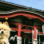 愛犬といっしょなら、見慣れた街もシアワセ模様!地元・名古屋の誇り「大須商店街(おおすしょうてんがい)」