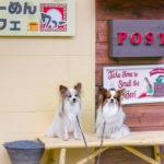 愛犬と一緒に浜名湖沿い舘山寺のペット可老舗「らーめんカフェ ワコー」へ!冬は薪ストーブで快適!<静岡県>