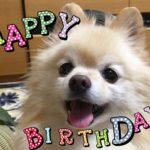 感謝の気持ちを忘れずに!バレンタインデーは愛犬のお誕生日♡愛情たっぷり簡単レシピもご紹介