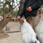 愛犬と一緒に奈良公園を散策!「奈良の鹿」の注意点や周辺にあるドッグフェ特集!