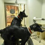 愛犬のケアが劇的に楽になる!ホームセンターのセルフドッグウォッシュに挑戦!