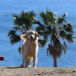 愛犬と南紀でバカンス!日本にいながら地中海リゾート気分が味わえるおすすめ旅行<三重県>