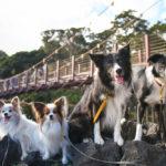 愛犬と城ヶ崎海岸へ!一度は渡ってみたい「門脇吊橋」は予想以上にスリル満点!<静岡県>