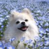 【東日本版】ゴールデンウィークに愛犬と行きたい春のお花が楽しめる観光スポット10選!