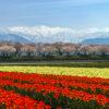 驚きの絶景スポット「春の四重奏」&北アルプスを望める「白馬村」で愛犬と早春のさわやか旅行!