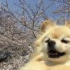 「赤い糸」に導かれた、愛犬との衝撃の出逢い!
