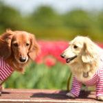 【西日本版】ゴールデンウィークに愛犬と行きたい春のお花畑が楽しめる観光地スポット11選!