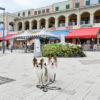 犬連れ旅行が何倍も楽しくなる新サービス登場!?「サービスエリア」最新情報をお届け!