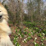 愛犬とマイナスイオンの園へ!季節折々の植物と景色を楽しめる「箱根湿生花園」