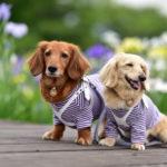 5~6月は愛犬と一緒に花菖蒲園&しょうぶまつりへ!関東・東海のおすすめスポット10選