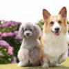 【関東・東海】愛犬と一緒に散策を楽しもう!6月の代表花「あじさい」の名所11選
