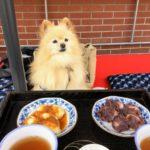 愛犬と初夏の軽井沢を満喫!「令和」初のドライブ旅行/観光スポット編