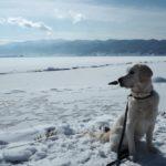愛犬と一緒に見たい冬の奇跡の絶景!諏訪湖の御神渡り<長野県諏訪市>