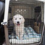 愛犬を旅犬に育てたい方へ!重要なのは子犬期の社会化旅行