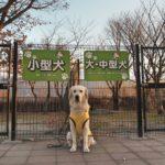 理想のドッグランとは?大型犬エリアで小型犬が遊ぶ理由を考えてみた!