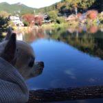 犬連れに優しい町!愛犬と一緒に湯布院散策旅行<大分県>