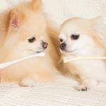 歯磨きが苦手なわんちゃんに朗報!簡単犬用デンタルケア用品をご紹介