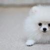 【動物看護師が解説】知っておきたい!愛犬の歯周病の治療方法とそのリスク