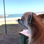 愛犬と海辺のデイキャンプ in 長崎鼻リゾートキャンプ場<大分県>