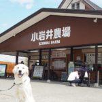 愛犬と一緒に岩手県へ行こう!自然を満喫♥春のみちのく犬連れ旅