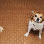 【動物看護師が解説】愛犬が吐いてしてしまったら?原因と対策と対処法