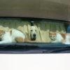 犬と猫、一緒に暮らせる?うまく共存するコツと注意するポイント!