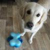 お出かけできない時でも愛犬に楽しみを!おうちで気軽に遊べるノーズワークのすすめ