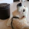 愛犬が元気な時こそ考えたい!わんちゃんの健康診断(ドッグドック)のススメ