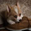 犬・猫の誤飲年間20万件!ペットの誤飲を防ぐには?【動物看護師が解説】