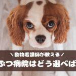 愛犬の健康のために!動物看護師が教える動物病院の選び方・つき合い方