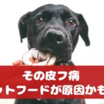 知らなかった!愛犬の皮膚病は食べ物が原因かも【動物看護師が解説】