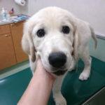 パピーから始めておこう!愛犬の「動物病院大好き貯金」
