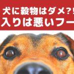 穀物入りのペットフードは犬の体に良くない?【動物看護師が解説】