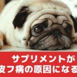 サプリメントが原因で犬が皮膚病になるって知ってた?【動物看護師が解説】