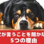 犬が飼い主さんの言うことを聞かない5つの理由【動物看護師が解説】