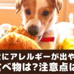 犬にアレルギーが出やすい食べ物ってなに?症状や予防について【動物看護師が解説】