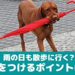 雨の日も愛犬の散歩に行く飼い主さんは6割!気を付けるポイントは?【動物看護師が解説】