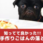 実は栄養不足?!知っててよかった犬用手作りごはんの落とし穴【動物看護師が解説】