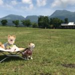 愛犬と一緒に絶景ドライブ!見どころいっぱい「阿蘇くじゅう国立公園」<大分県~熊本県>