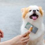 トリマーが教える!自宅で簡単、毛玉にならない犬のブラッシン方法