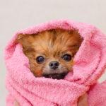 トリマーおすすめ!本当に安心して使える犬用シャンプーをご紹介