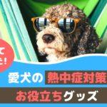 夏のお出かけを快適に!愛犬の熱中症対策とお役立ちグッズ【動物看護師が解説】