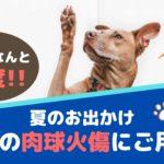 夏のお出かけ!愛犬の肉球火傷にご用心!【動物看護師が解説】