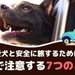 愛犬と安全にドライブするために!車で注意する7つのこと【動物看護師が解説】