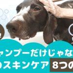 シャンプーだけじゃない!愛犬のスキンケア8つの方法【動物看護師が解説】