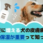 夏に増える犬の皮膚病!保湿予防が重要って知ってた?【動物看護師が解説】