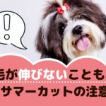 夏の定番☆愛犬のサマーカットには注意が必要?