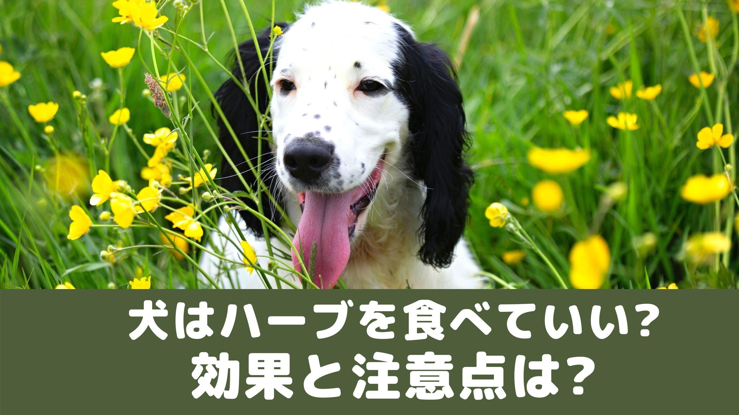 もの て いい 犬 が 食べ