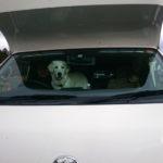 愛犬と一緒に車中泊旅行!楽しみ方と守るべきマナーとは?